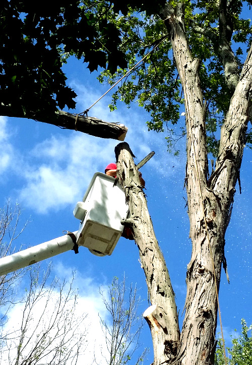 ArborScaper Tree & Landscape offers the full line of Landscaping and Tree Services in Rochester and Monroe County NY