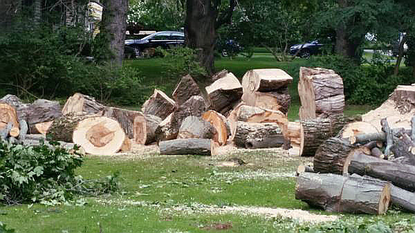 Landscaping and Tree Services from ArborScaper Tree & Landscape in Rochester NY