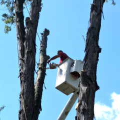 Tree Services: Tree Trimming, Pruning, & Full Tree Removal throughout Monroe County NY