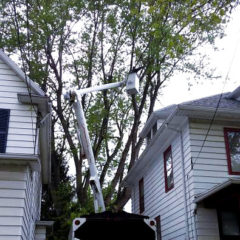 Tree Services: Trimming or Corrective Pruning even in very difficult situations