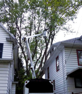Tree Services: Cutting or Pruning even in very difficult situations throughout Monroe County NY