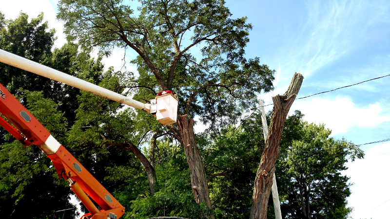 Experienced Tree Care Specialists serving Rochester NY - ArborScaper Tree & Landscape