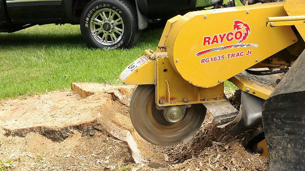ArborScaper Tree & Landscape provides Tree Removal and Stump Grinding