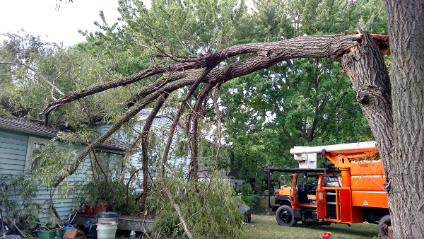 Storm Damage and Tree Damage repaired by ArborScaper Tree & Landscape in Rochester NY