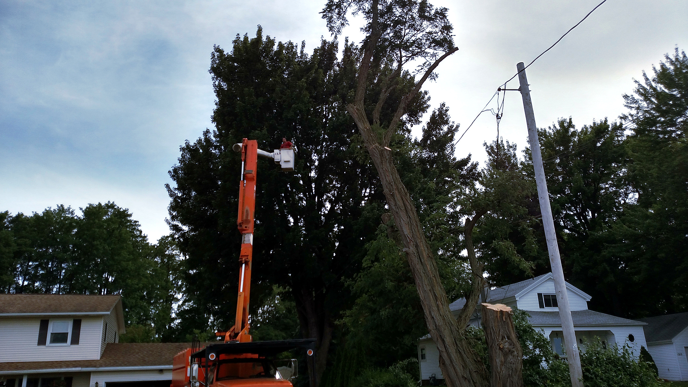 Tree Care Experts use Professional Forestry Equipment - ArborScaper Tree & Landscape - large