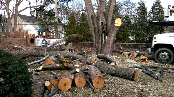 Tree Removal Services by ArborScaper Tree & Landscape in Rochester NY