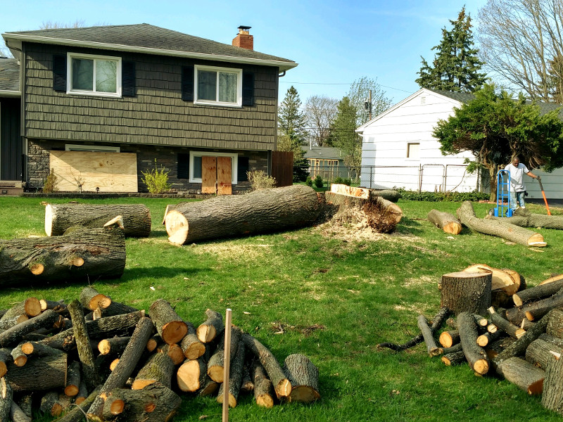 Linden Tree Removal and Stump Grinding in Monroe County NY - Tree Services by ArborScaper Tree & Landscape