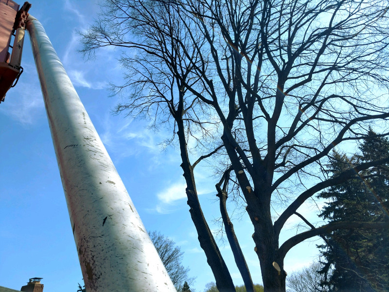 Linden Tree Removal in Rochester NY - Tree Services by ArborScaper Tree & Landscape