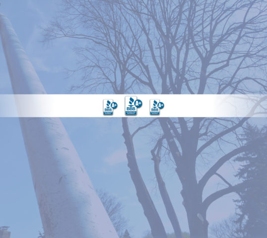 A+ Rated Tree Service in Rochester NY is Accredited Member of the Better Business Bureau (BBB)