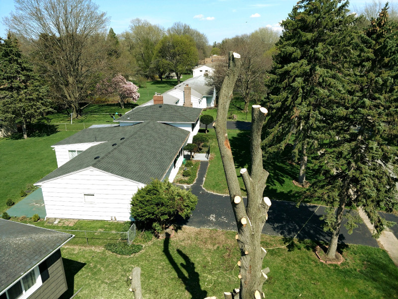Linden Tree Removal in Rochester NY using a Bucket Truck - Tree Services from ArborScaper Tree & Landscape