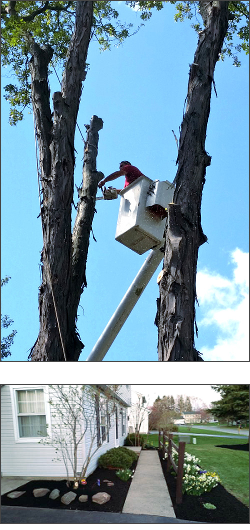 Tree Services in Rochester, NY: Tree Trimming, Tree Removal, Stump Grinding, & Landscaping - ArborScaper Tree & Landscape
